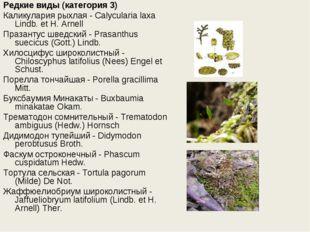 Редкие виды (категория 3) Каликулария рыхлая - Calycularia laxa Lindb. et H.