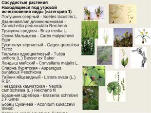 Сосудистые растения Находящиеся под угрозой исчезновения виды (категория 1) П