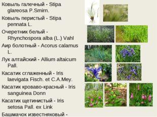 Ковыль галечный - Stipa glareosa P.Smirn. Ковыль перистый - Stipa pennata L.