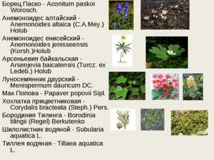 Борец Паско - Aconitum paskoi Worosch. Анемоноидес алтайский - Anemonoides al