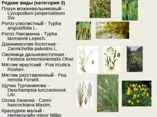 Редкие виды (категория 3) Плаун можжевельниковый - Lycopodium juniperoideum S