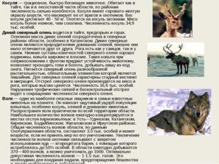 Косуля— грациозное, быстро бегающее животное. Обитает как в тайге, так и в л