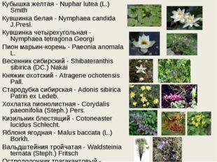Кубышка желтая - Nuphar lutea (L.) Smith Кувшинка белая - Nymphaea candida J.