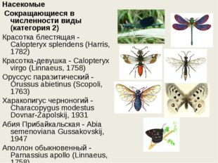 Насекомые Сокращающиеся в численности виды (категория 2) Красотка блестящая
