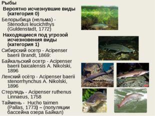 Рыбы Вероятно исчезнувшие виды (категория 0) Белорыбица (нельма) - Stenodus