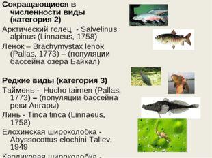 Сокращающиеся в численности виды (категория 2) Арктический голец - Salvelinu