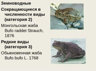 Земноводные Сокращающиеся в численности виды (категория 2) Монгольская жаба B