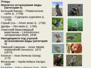 Птицы Вероятно исчезнувшие виды (категория 0) Большой баклан – Phalacrocorax