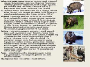 Кабан, или дикая свинья, является предком нашей домашней свиньи. Кабан всеядн