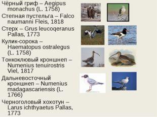 Чёрный гриф – Aegipus monachus (L. 1758) Степная пустельга – Falco naumanni F