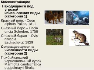 Млекопитающие Находящиеся под угрозой исчезновения виды (категория 1) Красны