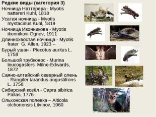 Редкие виды (категория 3) Ночница Наттерера - Myotis nattereri Kuhl, 1818 Уса