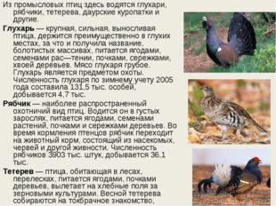 Из промысловых птиц здесь водятся глухари, рябчики, тетерева, даурские куропа