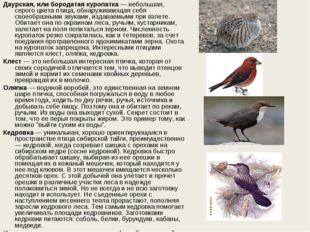 Даурская, или бородатая куропатка— небольшая, серого цвета птица, обнаружива