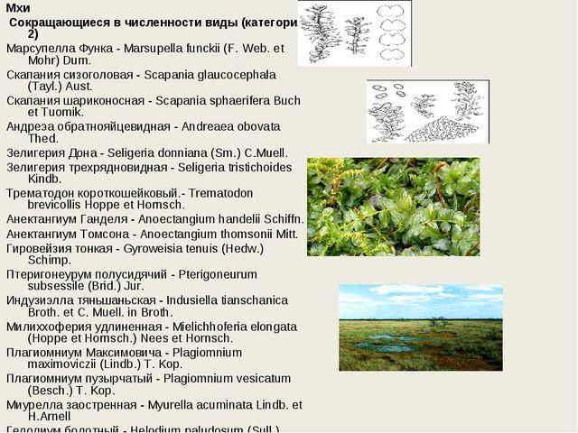 Мхи Сокращающиеся в численности виды (категория 2) Марсупелла Функа - Marsup...
