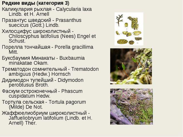 Редкие виды (категория 3) Каликулария рыхлая - Calycularia laxa Lindb. et H....