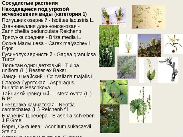 Сосудистые растения Находящиеся под угрозой исчезновения виды (категория 1) П...