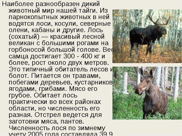 Наиболее разнообразен дикий животный мир нашей тайги. Из парнокопытных животн...