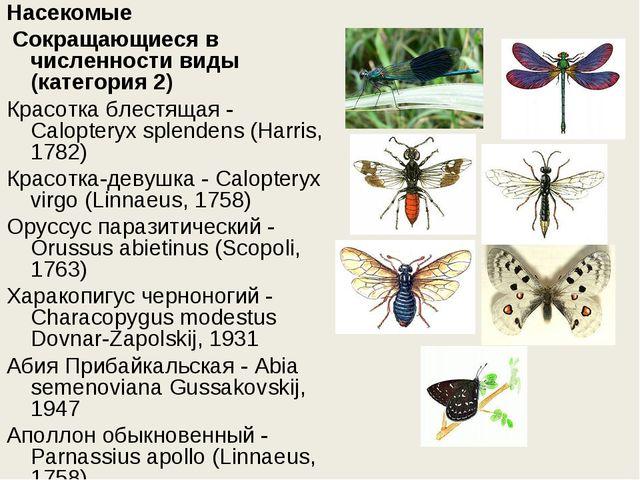 Насекомые Сокращающиеся в численности виды (категория 2) Красотка блестящая...