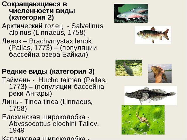 Сокращающиеся в численности виды (категория 2) Арктический голец - Salvelinu...