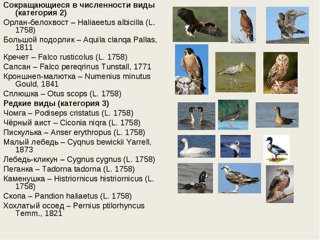 Сокращающиеся в численности виды (категория 2) Орлан-белохвост – Haliaeetus a...