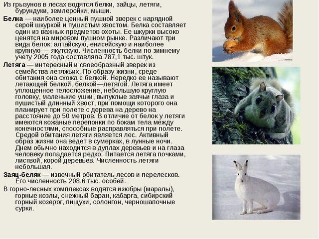 Из грызунов в лесах водятся белки, зайцы, летяги, бурундуки, землеройки, мыши...