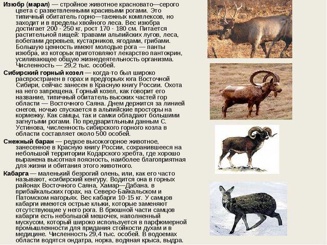 Изюбр (марал)— стройное животное красновато—серого цвета с разветвленными кр...
