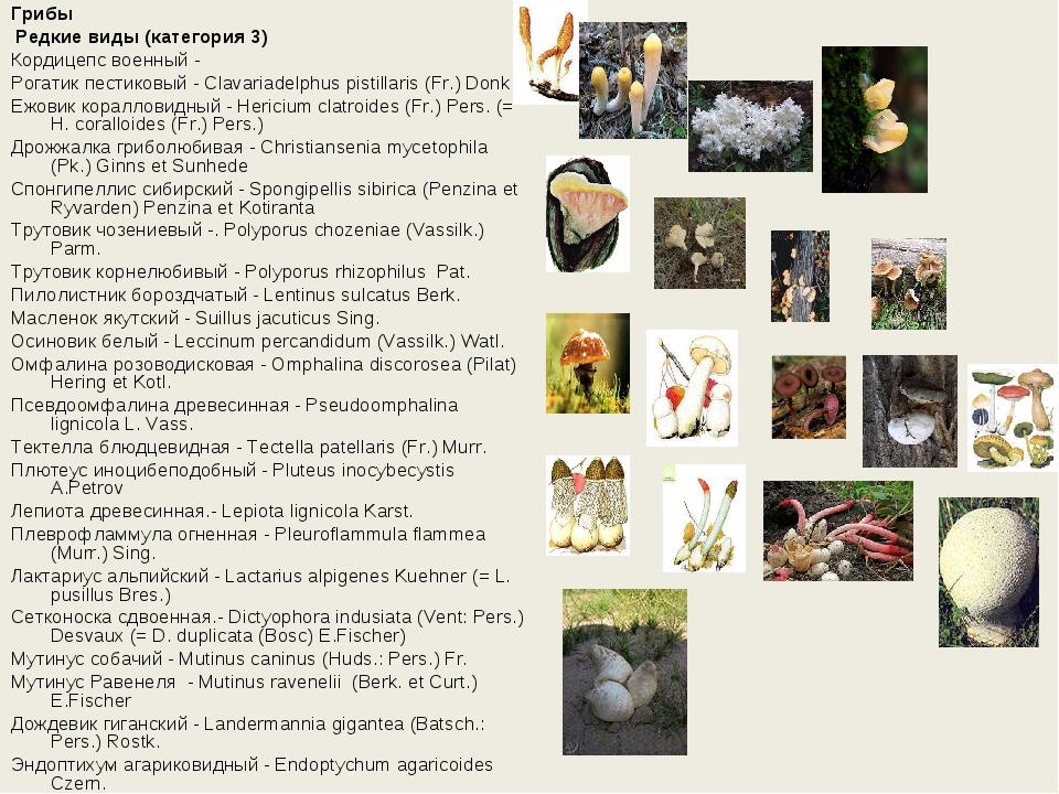 Грибы Редкие виды (категория 3) Кордицепс военный - Рогатик пестиковый - Cla...