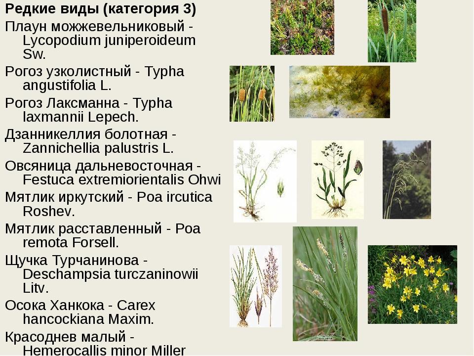 Редкие виды (категория 3) Плаун можжевельниковый - Lycopodium juniperoideum S...