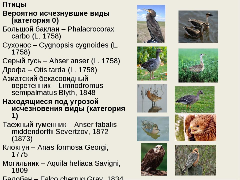 Птицы Вероятно исчезнувшие виды (категория 0) Большой баклан – Phalacrocorax...