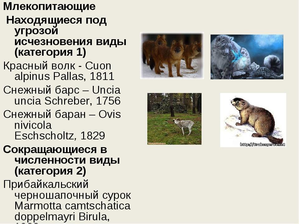 Млекопитающие Находящиеся под угрозой исчезновения виды (категория 1) Красны...
