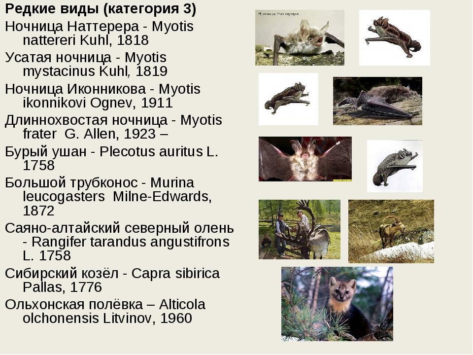 Редкие виды (категория 3) Ночница Наттерера - Myotis nattereri Kuhl, 1818 Уса...