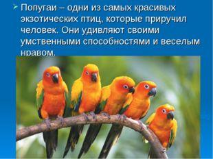 Попугаи – одни из самых красивых экзотических птиц, которые приручил человек.