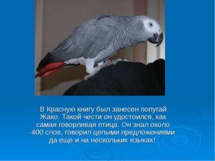 В Красную книгу был занесен попугай Жако. Такой чести он удостоился, как сама