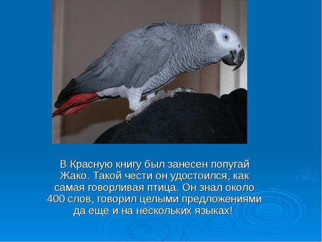 В Красную книгу был занесен попугай Жако. Такой чести он удостоился, как сама...