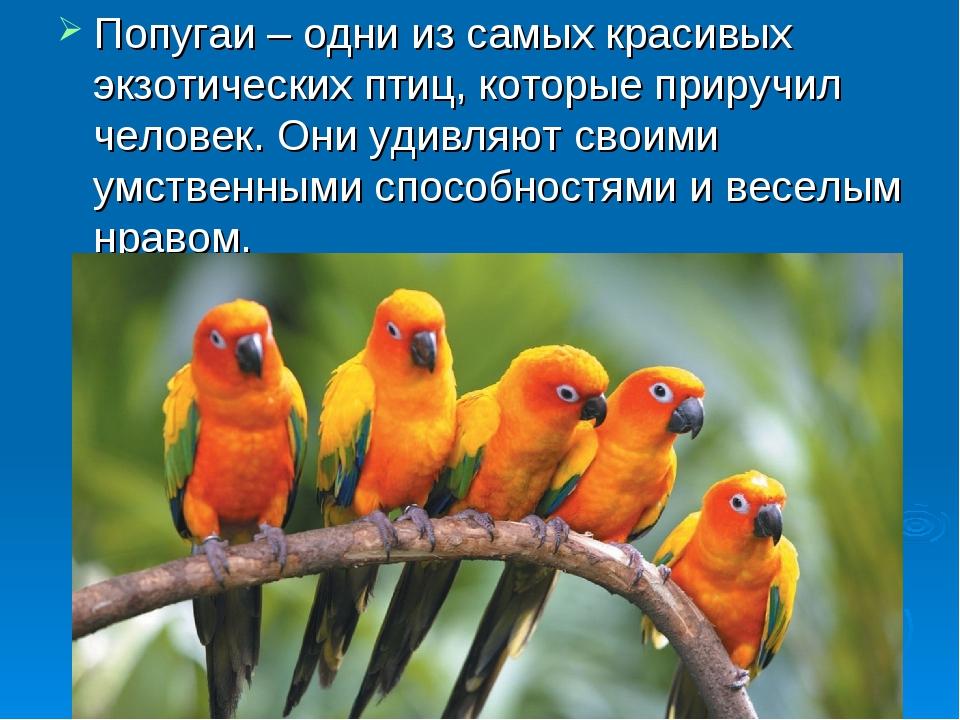 Попугаи – одни из самых красивых экзотических птиц, которые приручил человек....