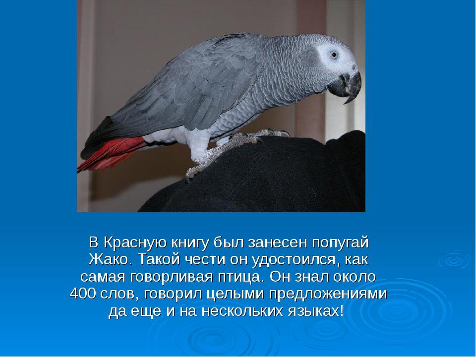 Какие попугаи в красной книге
