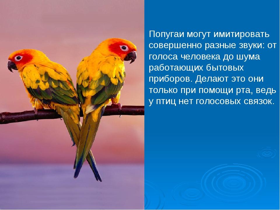 Попугаи могут имитировать совершенно разные звуки: от голоса человека до шума...