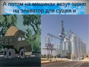 А потом на машинах везут зерно на элеватор для сушки и хранения зёрен.