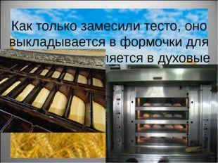 Как только замесили тесто, оно выкладывается в формочки для хлеба и отправля