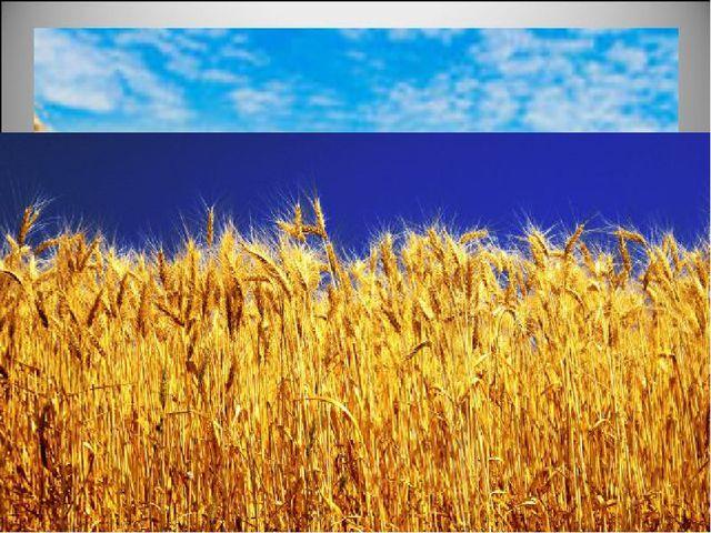 Но вот зерна созрели. Начинается жатва. В поле выходят комбайны. Кто работае...