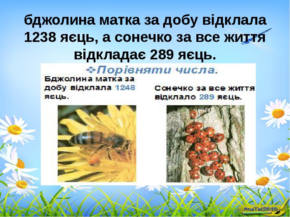 бджолина матка за добу відклала 1238 яєць, а сонечко за все життя відкладає 2...