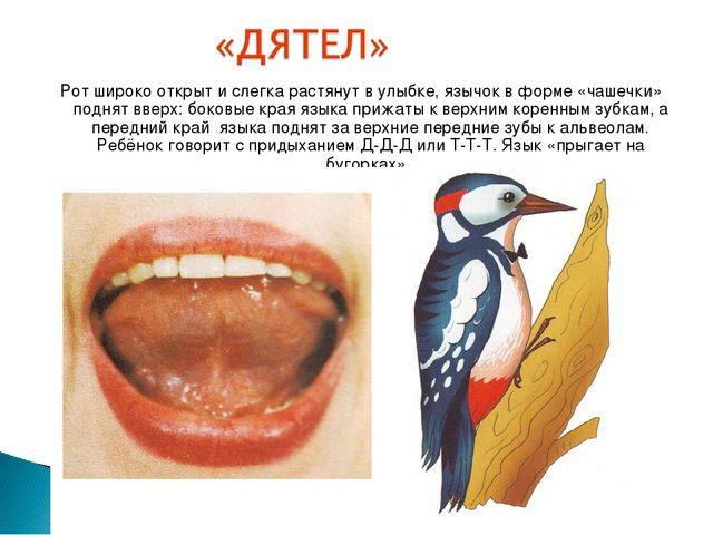 Рот широко открыт и слегка растянут в улыбке, язычок в форме «чашечки» поднят...