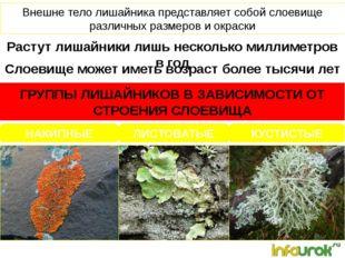 Растут лишайники лишь несколько миллиметров в год Внешне тело лишайника предс