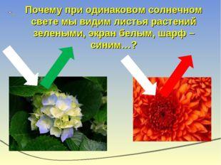 Почему при одинаковом солнечном свете мы видим листья растений зелеными, экра