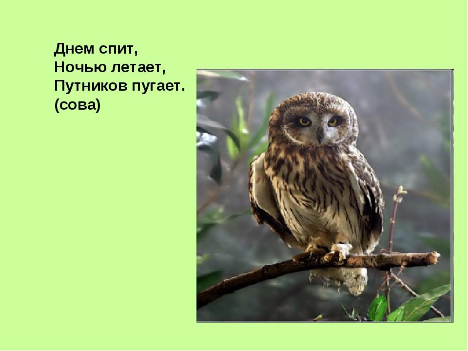 Днем спит, Ночью летает, Путников пугает. (сова)