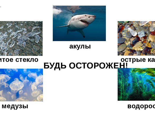 БУДЬ ОСТОРОЖЕН! острые камни битое стекло акулы медузы водоросли