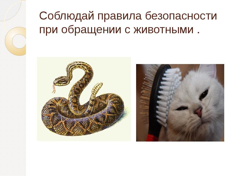 Соблюдай правила безопасности при обращении с животными .