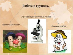 * * Работа в группах. Строение одноклеточных грибов Шляпочные грибы Питание г