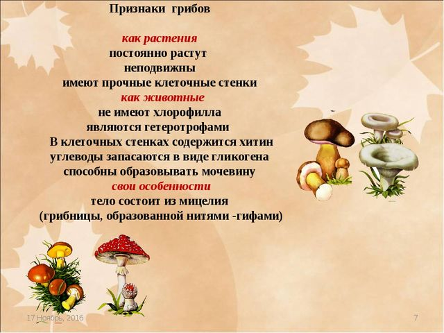 * * Признаки грибов как растения постоянно растут неподвижны имеют прочные кл...